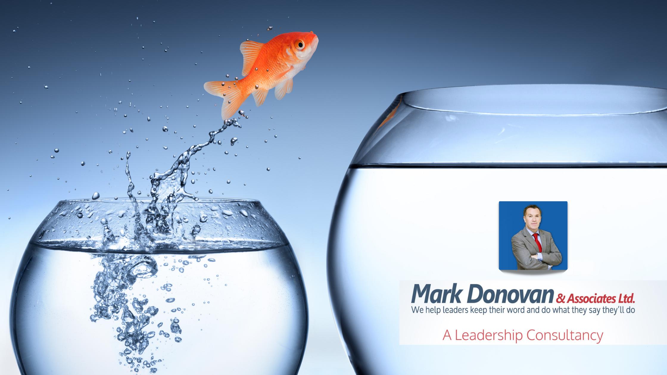 Immersive Technologies Skillnet Goldfish Jumping from small to big bowl